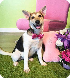 Labrador Retriever/Shepherd (Unknown Type) Mix Dog for adoption in Castro Valley, California - Jane