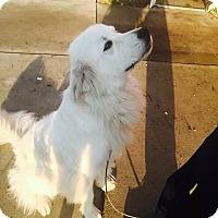 Adopt A Pet :: Hercules - Minneapolis, MN
