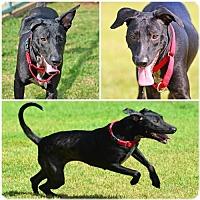 Adopt A Pet :: Winnie - Vancouver, WA