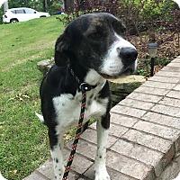 Adopt A Pet :: Lizzy meet me 5/19 - Manchester, CT