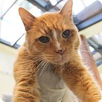 Adopt A Pet :: Santiago - Richmond, VA