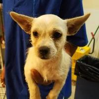 Adopt A Pet :: LEAH - St. Thomas, VI