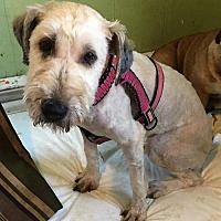 Adopt A Pet :: Nellie - Buffalo, NY