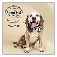Adopt A Pet :: Walter - Louisville, KY