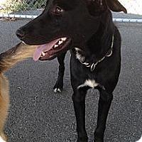 Adopt A Pet :: Rocco - Richmond, VA