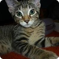Adopt A Pet :: Zooey - Milwaukee, WI