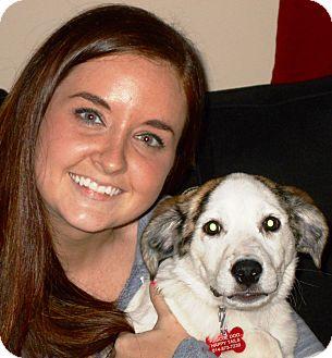 Spaniel (Unknown Type) Mix Puppy for adoption in Plain City, Ohio - Minka (Jelly Bean)