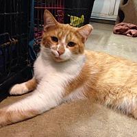 Adopt A Pet :: Lester - Ladysmith, VA