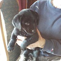 Adopt A Pet :: Squeeker - Oakland, AR