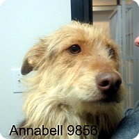 Adopt A Pet :: Annabell - Greencastle, NC