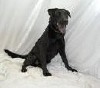 Labrador Retriever Mix Dog for adoption in Jackson, Mississippi - Benson