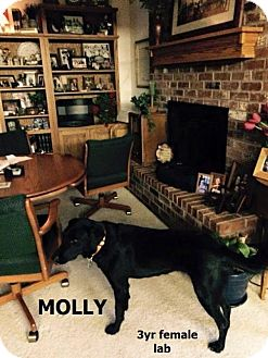 Labrador Retriever Dog for adoption in Garber, Oklahoma - Molly