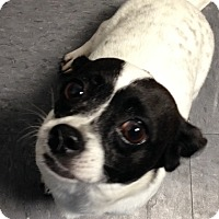 Adopt A Pet :: Zoey - Natchitoches, LA