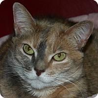 Adopt A Pet :: Hope - North Branford, CT
