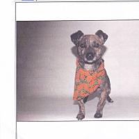 Adopt A Pet :: Jaxx - Lomita, CA