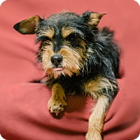 Adopt A Pet :: M.J. - Pueblo, CO
