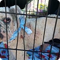 Adopt A Pet :: Mercy - Santa Ana, CA