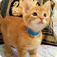 Adopt A Pet :: Blazer - Medina, OH