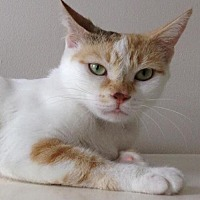 Adopt A Pet :: Skye - Thornhill, ON