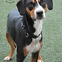 Adopt A Pet :: Digger - Youngwood, PA