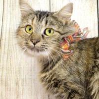 Adopt A Pet :: Ziti - Harrisonburg, VA