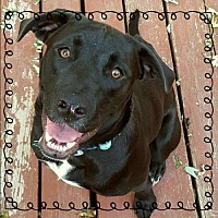Adopt A Pet :: Jane - Cedar Rapids, IA