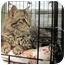 Photo 2 - Domestic Longhair Kitten for adoption in Overland Park, Kansas - Jeanne