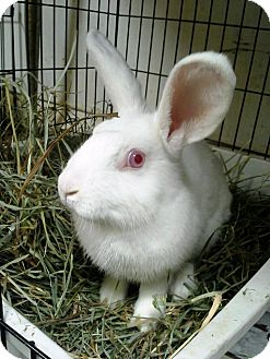 Dwarf Mix for adoption in Edinburg, Pennsylvania - April