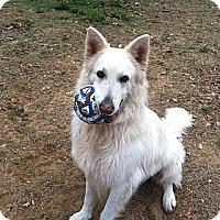 Adopt A Pet :: Gee - Dundee, FL