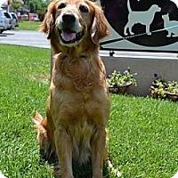Adopt A Pet :: Jolene - Brattleboro, VT
