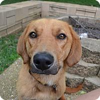Adopt A Pet :: Sully - Homewood, AL