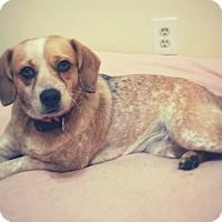 Adopt A Pet :: Katie loves kids! - Madison, TN