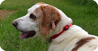 Hound (Unknown Type) Mix Dog for adoption in Bakersville, North Carolina - Pick