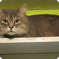 Adopt A Pet :: Bandon - Coos Bay, OR