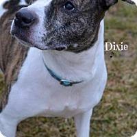 Adopt A Pet :: Dixie - Niagara Falls, NY