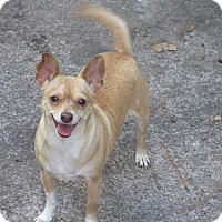 Adopt A Pet :: A - GLORY - Ann Arbor, MI
