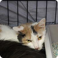 Adopt A Pet :: Cinnamon - Warwick, RI