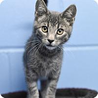 Adopt A Pet :: Texas - Homewood, AL