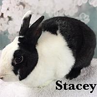 Adopt A Pet :: Stacey - Auburn, CA