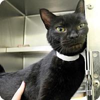 Adopt A Pet :: Salem - Richmond, VA