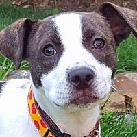 Adopt A Pet :: Ellie Mae - Massachusetts - Fulton, MO