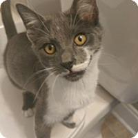 Adopt A Pet :: Sharky - Monroe, NC