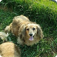 Adopt A Pet :: Tiffany - Sherman, CT
