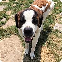 Adopt A Pet :: Diesel - McKinney, TX