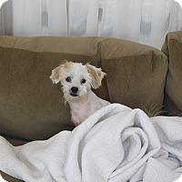 Adopt A Pet :: Miley - West Deptford, NJ