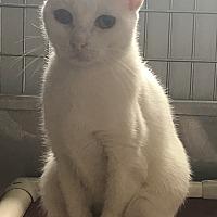 Adopt A Pet :: Heather - Lafayette, NJ