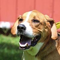 Adopt A Pet :: Monty - Asheville, NC