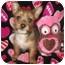 Photo 1 - Yorkie, Yorkshire Terrier/Pomeranian Mix Puppy for adoption in Wauseon, Ohio - Destiny