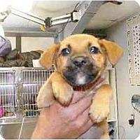 Adopt A Pet :: Wilma - Alexandria, VA