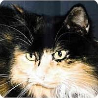 Adopt A Pet :: Kaeli - Medway, MA